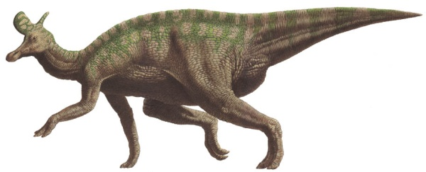 Dinosaurios Lambeosaurus Los ornitisquios (ornithischia), que en griego significan «caderas de ave», es uno de los dos órdenes de dinosaurios que vivieron desde el triásico superior hasta el cretácico superior. yupis