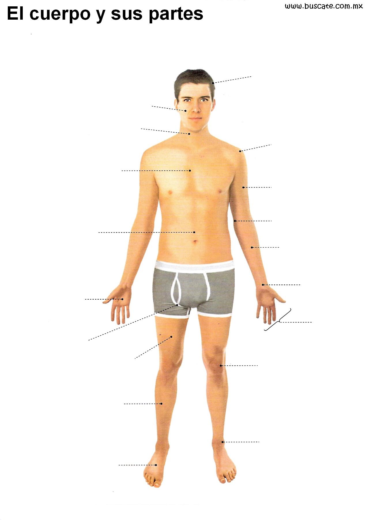 Excepcional Diagrama De Partes Del Cuerpo Humano Bosquejo - Anatomía ...
